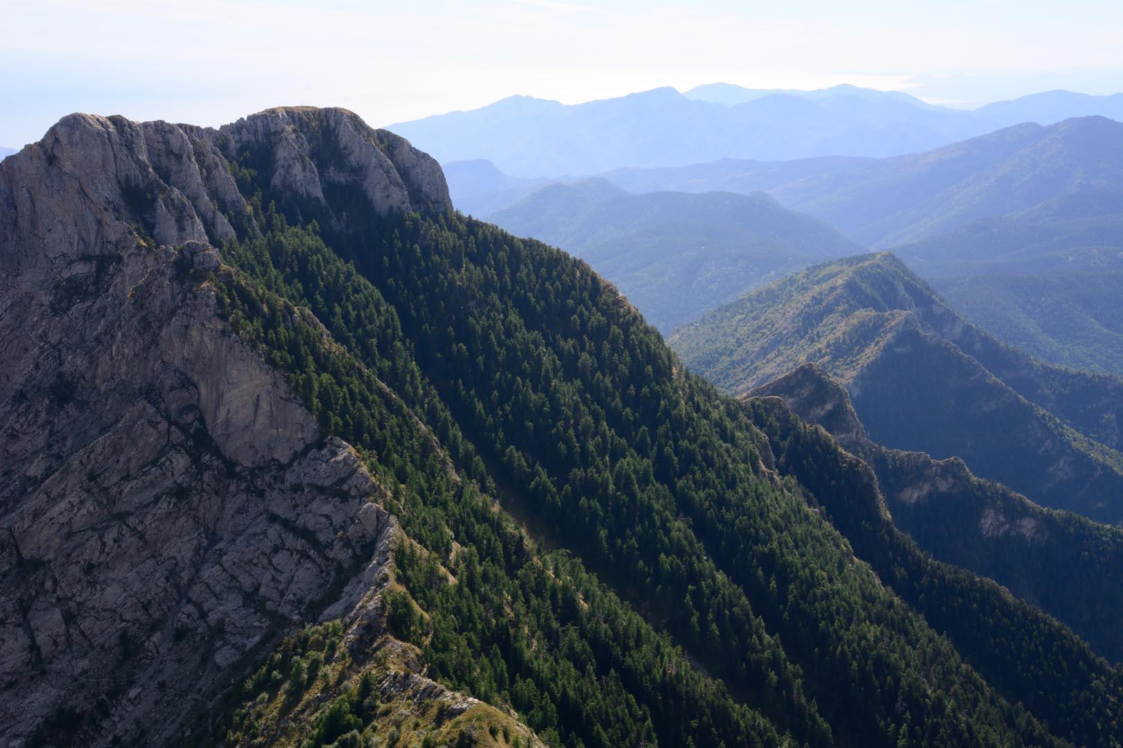 Nid d'Aigle des Alpes Ligures