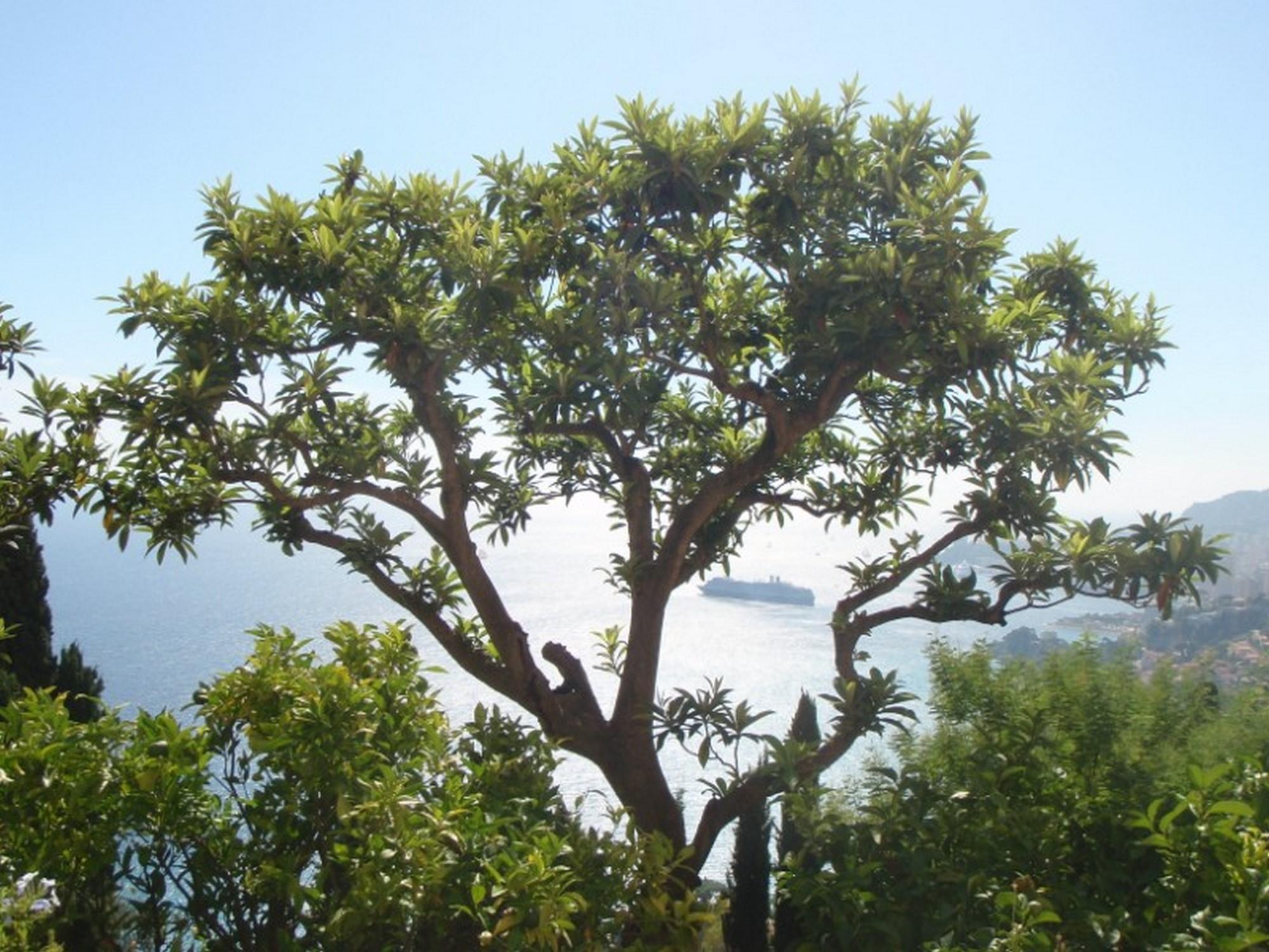 Traversée d'Isola 2000 à Menton – GTM