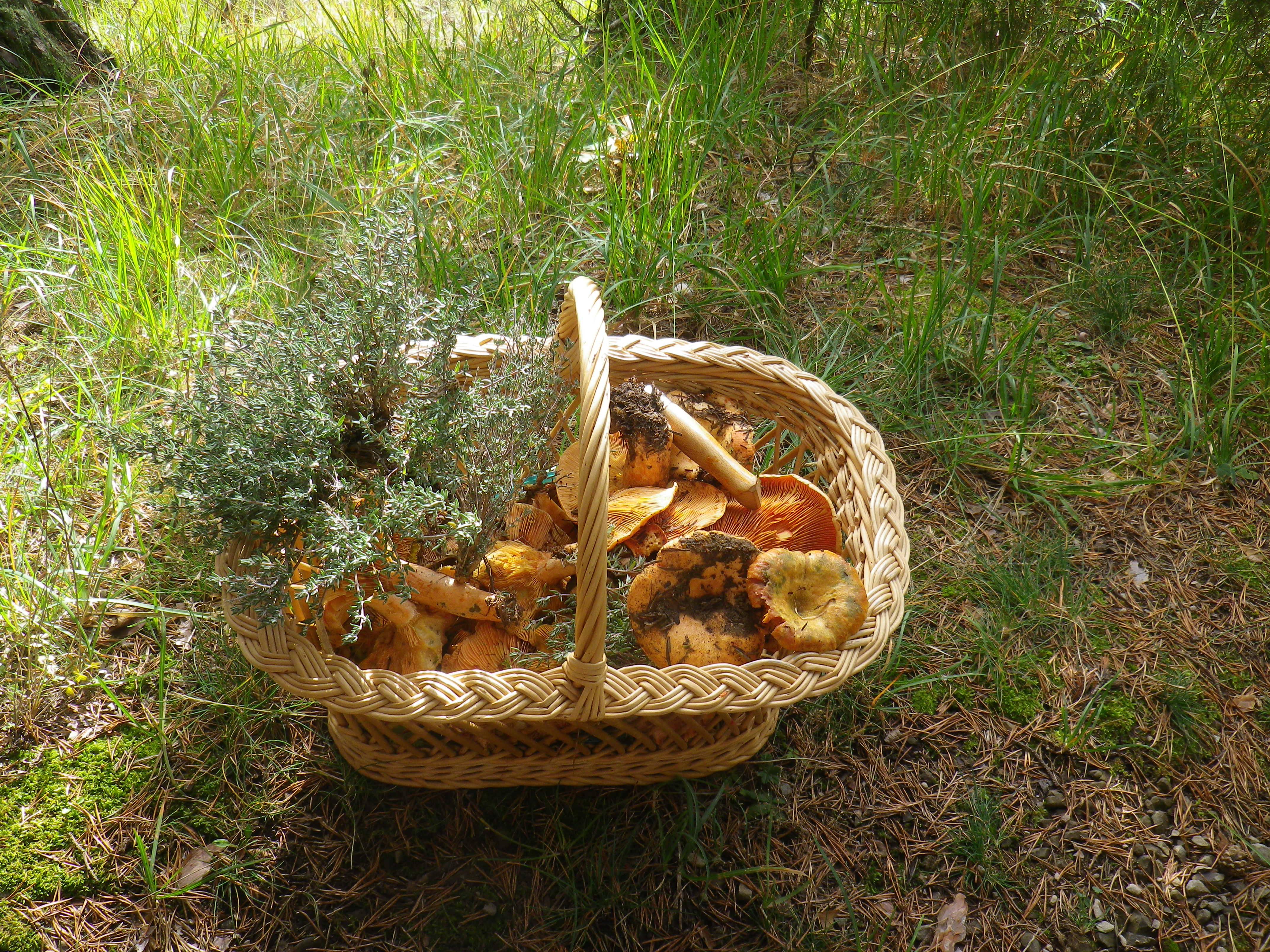 Découverte des champignons – Automne